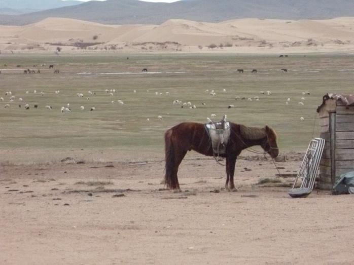 Mongolia_VersPetitGobi-cheval