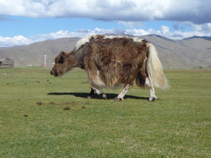 Mongolia_Orkhon-Yack8