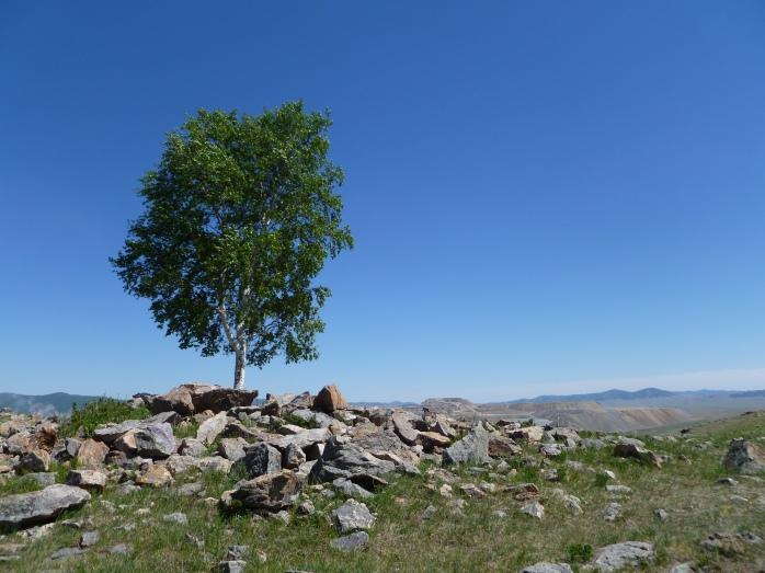Mongolia_Erdenet-Arbre2