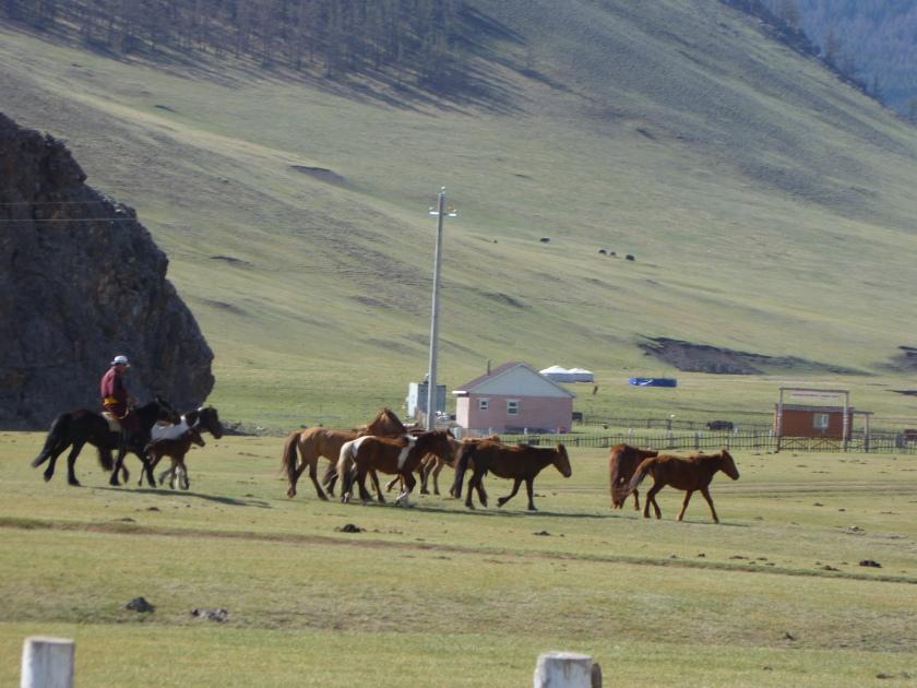 Mongolia_Orkhon-Cowboys&horses